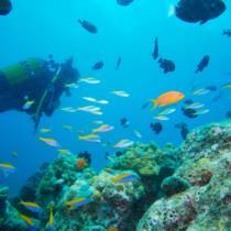 События в туристическом мире Мальдивских островов