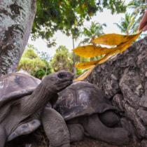 Безмятежный релакс в окружении экзотической природы: летим на Сейшелы!