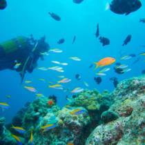 «Тайны Индийского океана»: новый обучающий проект от PAC GROUP