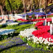 Весна в Турции: солнце, тюльпаны и смягчение карантинных мер!
