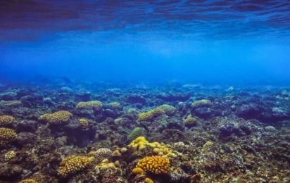 Сейшелы. Остров Фелиций