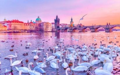 Прага. Лебеди на реке Влтаве. Карлов мост