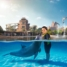 ATLANTIS THE PALM, DUBAI. Dolphin Bay