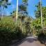 Сейшелы. Остров Маэ. Ботанические сады Виктории.